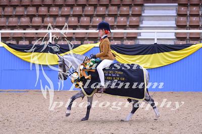 Class 28 Sm Show Hunter Pony