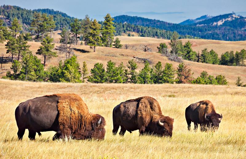 6530 Buffalo