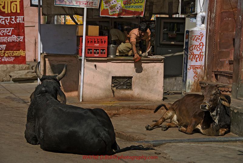 INDIA2010-0206A-182A.jpg