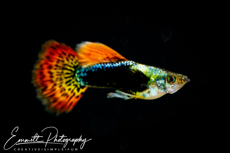 20200208-Fish-2.jpg