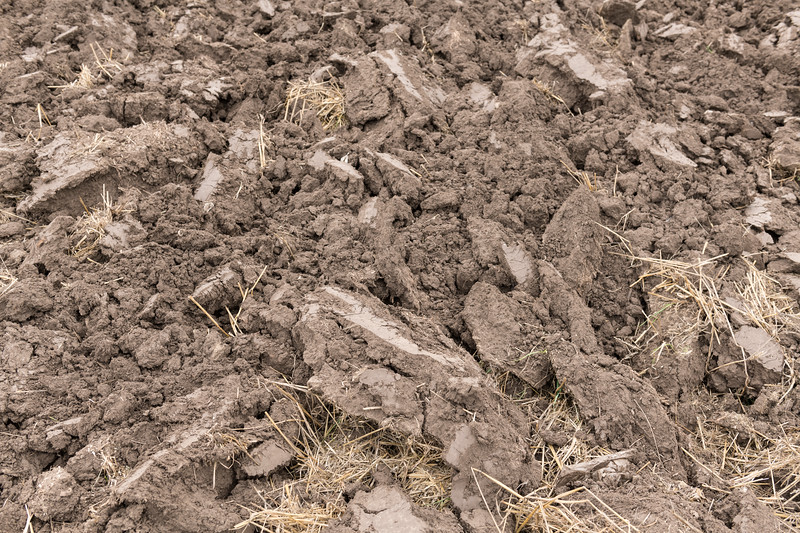 Cultivated Soil