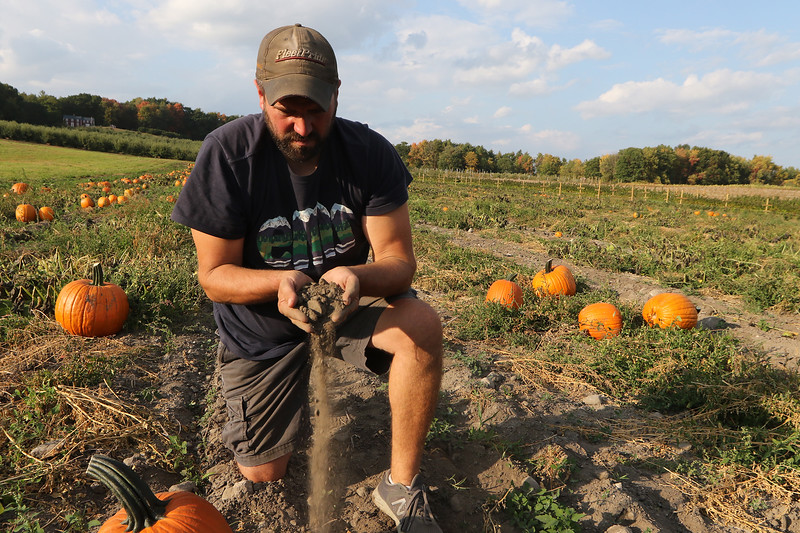 Jim Lattanzi, owner of Hollis Hills Farm in Fitchburg, shows how dry the soil is in a pumpkin field. All their fields have drip irrigation, but except around the plants, he says you couldn't dig down far enough to find moisture. (Sentinel & Enterprise/Julia Malakie)