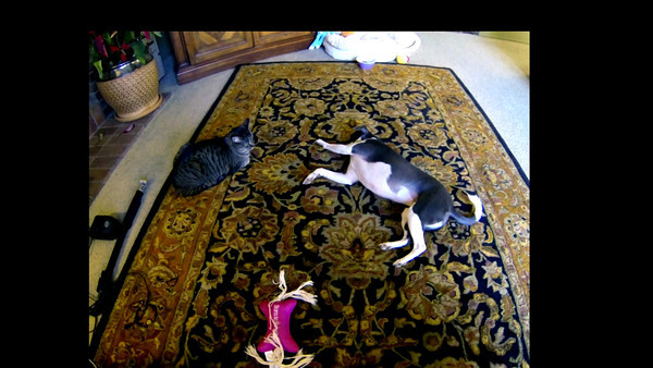 Maura wanting Waverly to Play