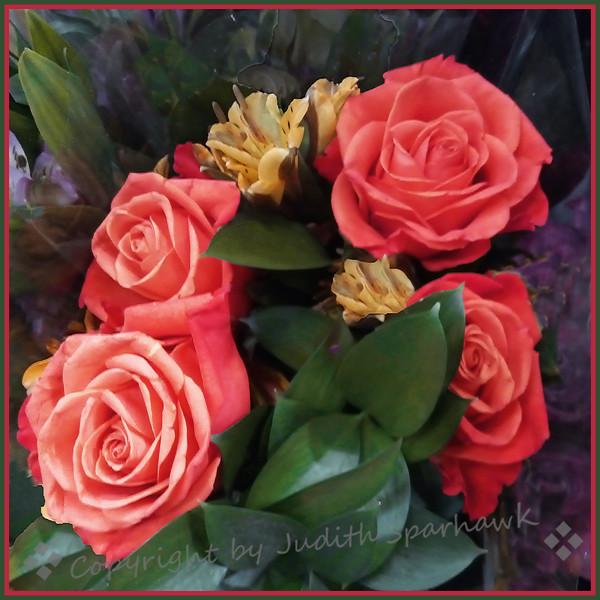 Roses for Janet - Judith Sparhawk