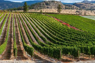The Okanagan WineTour Getaway 09.25.17