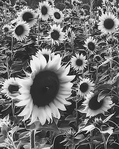 Black & White ~ 2015 & 2016