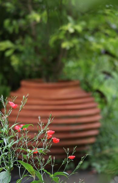 garden (123).jpg
