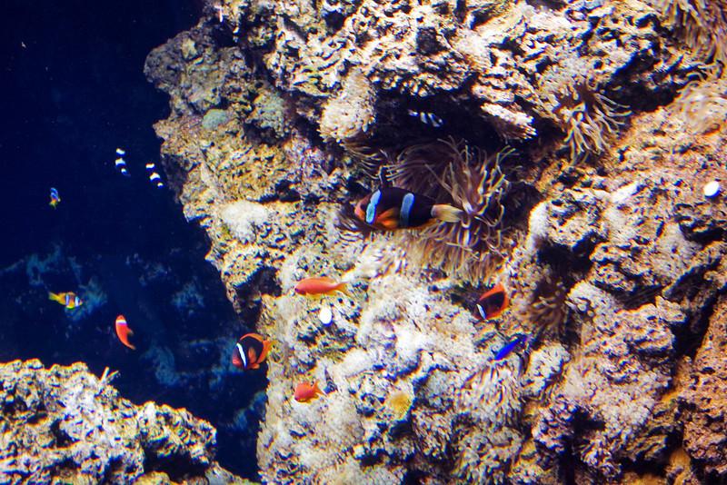 Anenome Fish.jpg