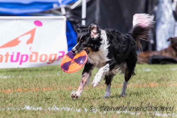 _MG_3199Up_dog_International_2016_StephaniellenPhotography.jpg