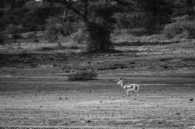 Tanzania_Feb_2018-50.jpg