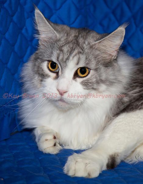 CatShow2014029.JPG