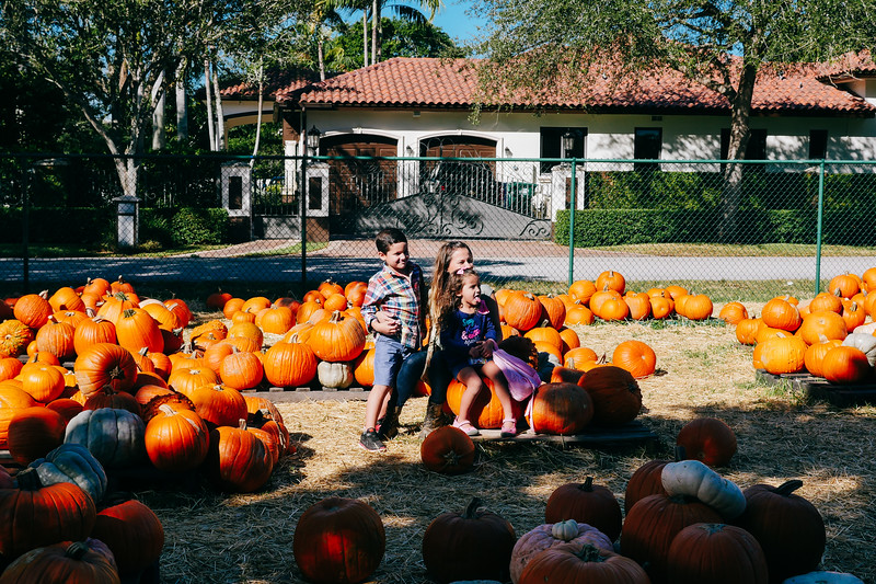 pumpkin patch (1 of 1).jpg