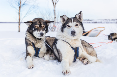 Dog sledding (day 2)