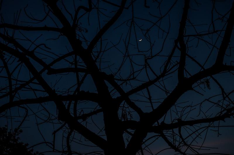 09_27_2014_SA_D270_DreamHouse_Apt_TreeHouse.jpg