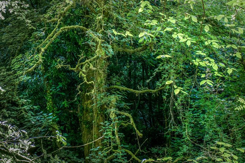 Longtimber Woods