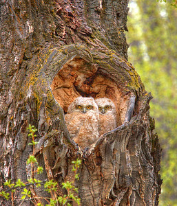 In the Heart of a Tree