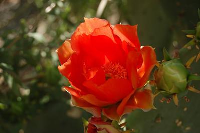 2011, Spring at the Desert Botanical Garden