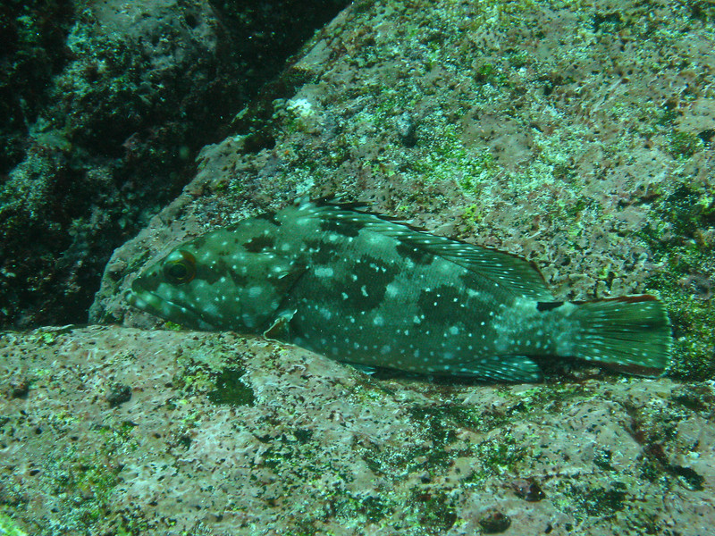 Diving in the Galapagos (337 of 392)