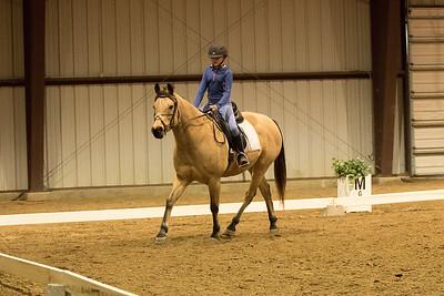 Horse 646