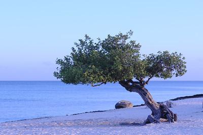 2011 Aruba