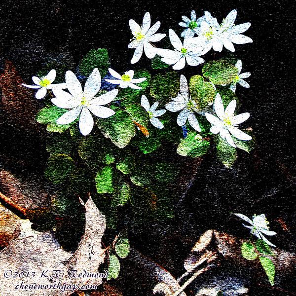 Wildflowers (Photoshopped)