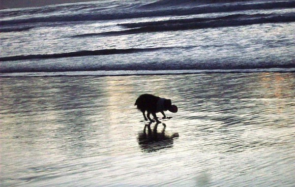 Beach Dogs Winter 2010