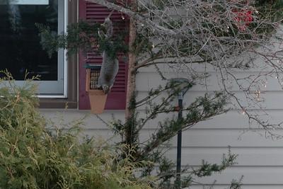 2020 01 07: Neighborhood Walk, Jefferson-Greysolon