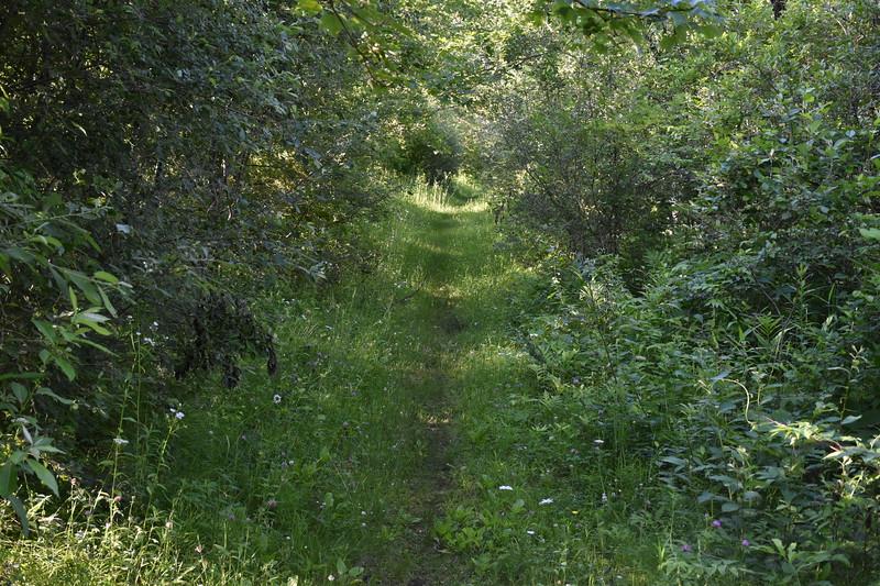 2019_06_26 CS Trail (68).JPG
