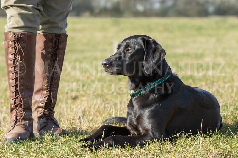 Dog Training Novice GD Feb2019-5890.jpg