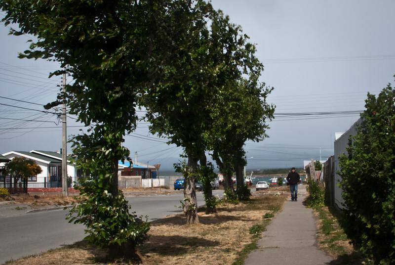 Puerto Natales 201112 (44).jpg