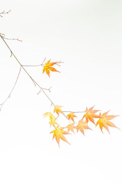 Leaf series