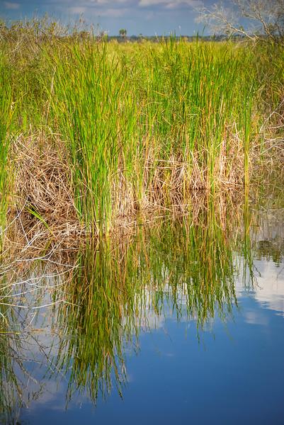 Everglades-39.jpg