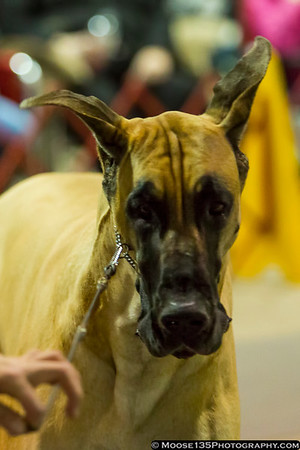Raleigh AKC Dog Show - March 2018