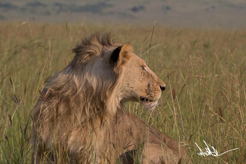 Lions Masai Mara - S-9.jpg