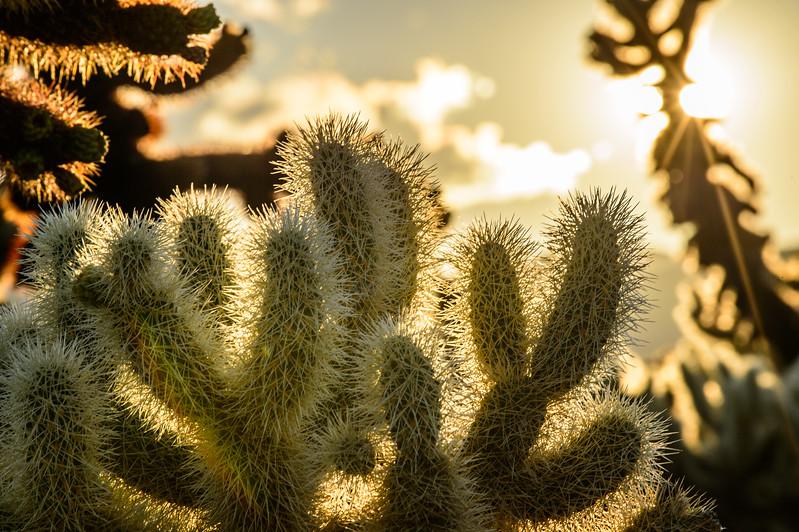 Joshua Tree 55.jpg
