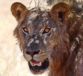Tanzania Süd, Säugetiere ++, Sept 18 - TZ South, Mammals + Sept 18