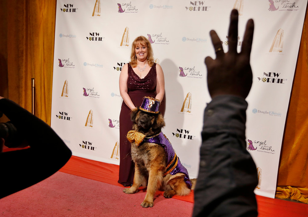 Description of . Morgan Avila stands with her dog Mr. America on the red carpet before the start of the New Yorkie Runway Doggie Fashion Show in New York February 7, 2013. REUTERS/Shannon Stapleton