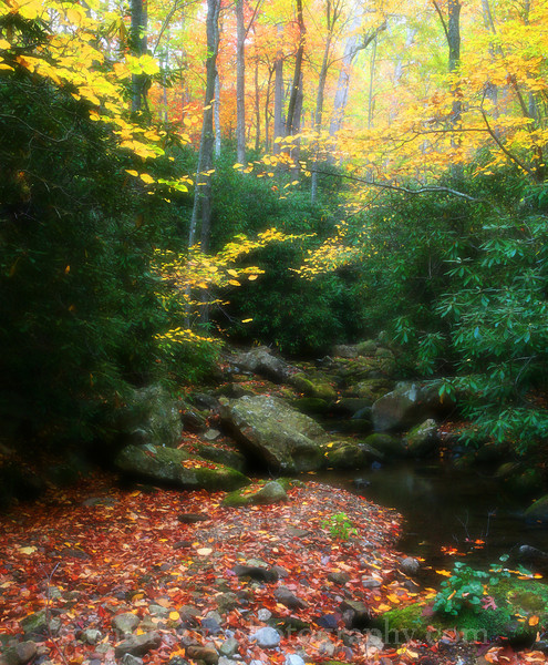 Autumn on Barbour's Creek