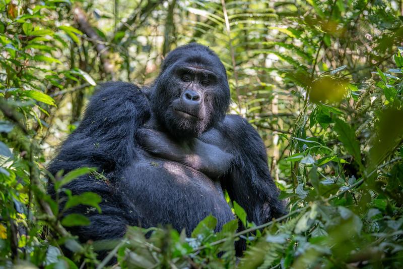 Uganda_T_Gor-497.jpg