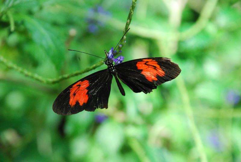 Denver Butterfly Pavilion 2432086271.jpg