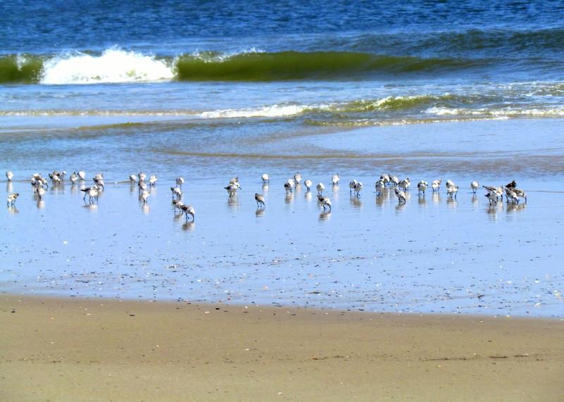 Outer Banks Corolla (229).jpg