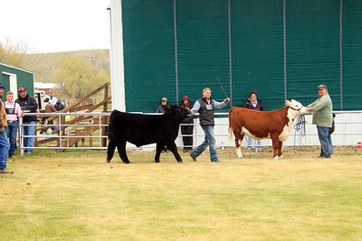 Grand Champion Beef Showmanship
