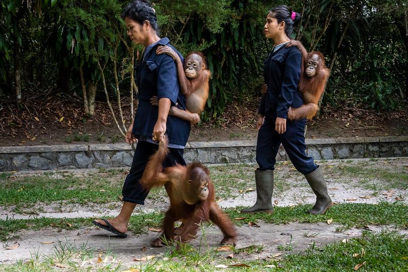 Borneo-2224-2.jpg