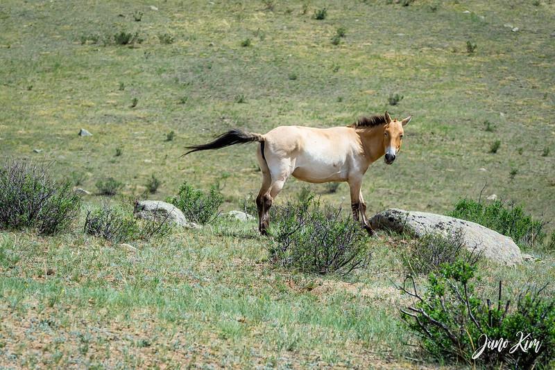 Kustei National Park__6109496-Juno Kim.jpg