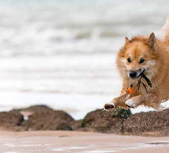 Beach Frenzy