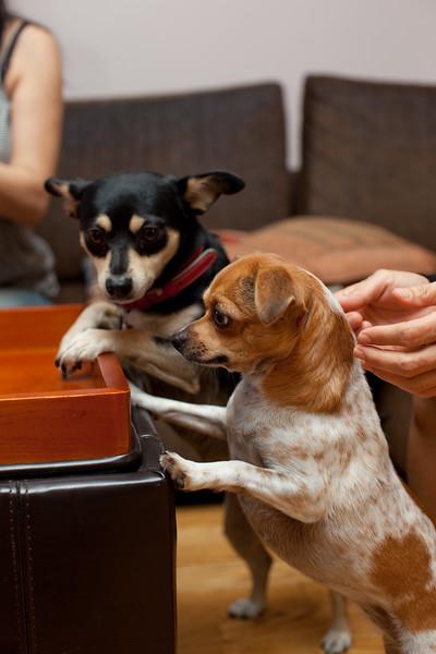 Dog-sushi-halloween2-23.jpg