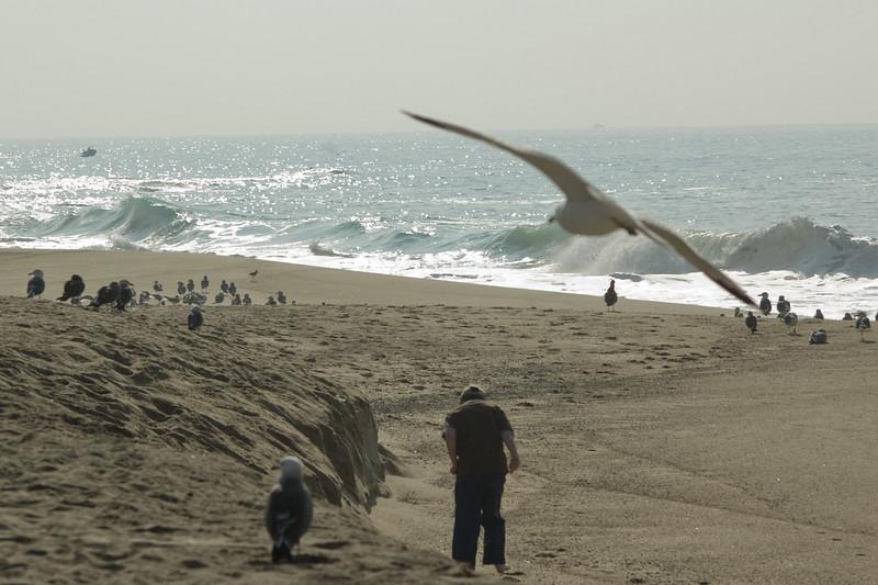 gulls (3).jpg