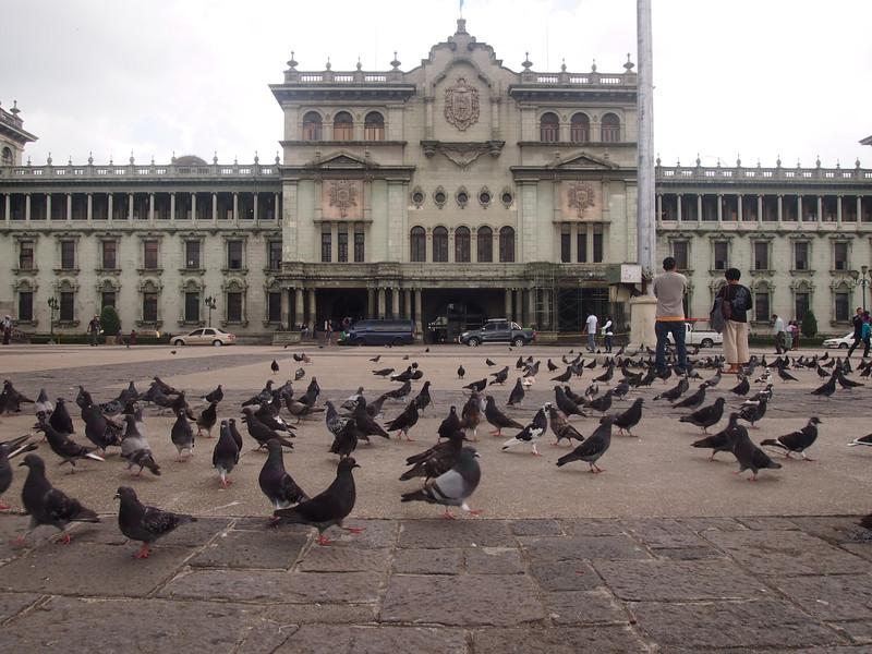 P7030565-plaza-central-pigeons.JPG