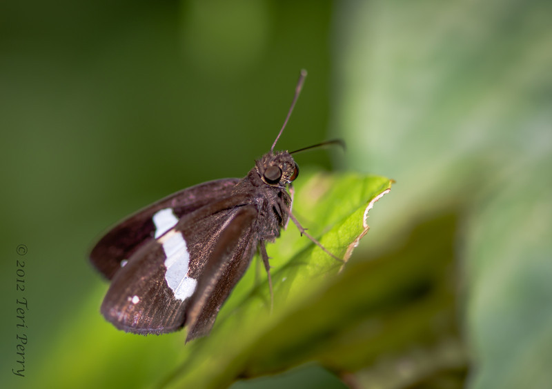 INSECT - Moth-1769.jpg