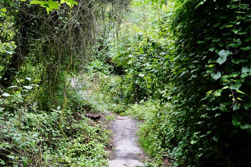 Path 1.jpeg
